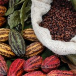 Cocoa for skin
